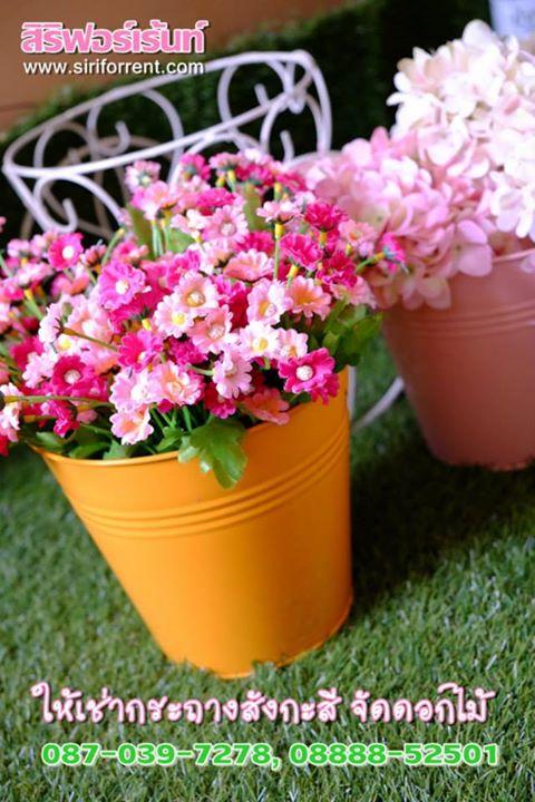 ถังสังกะสีจัดดอกไม้ เช่าถังสังกะสีจัดดอกไม้ เช่าถังสังกะสีสำหรับจัดดอกไม้